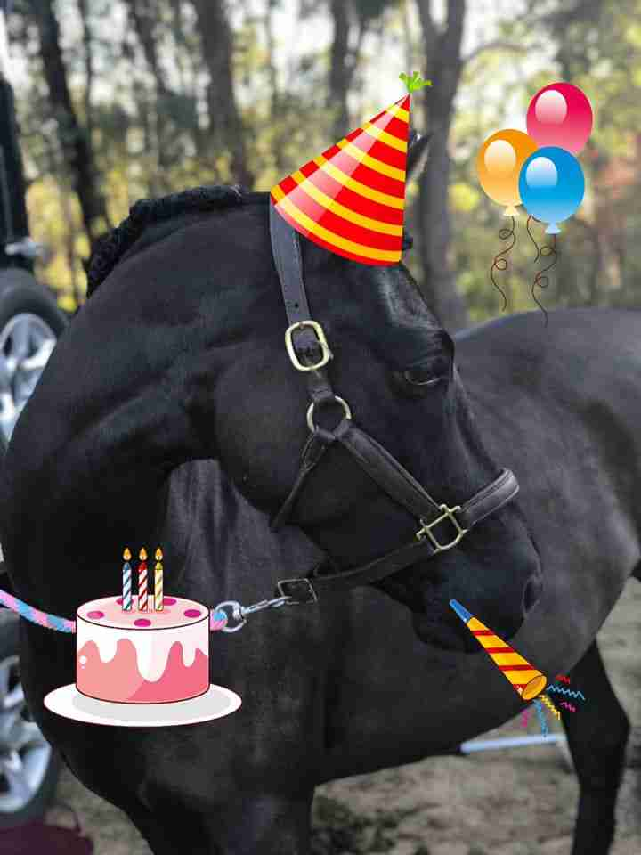 Does your horse really care about birthday sales?